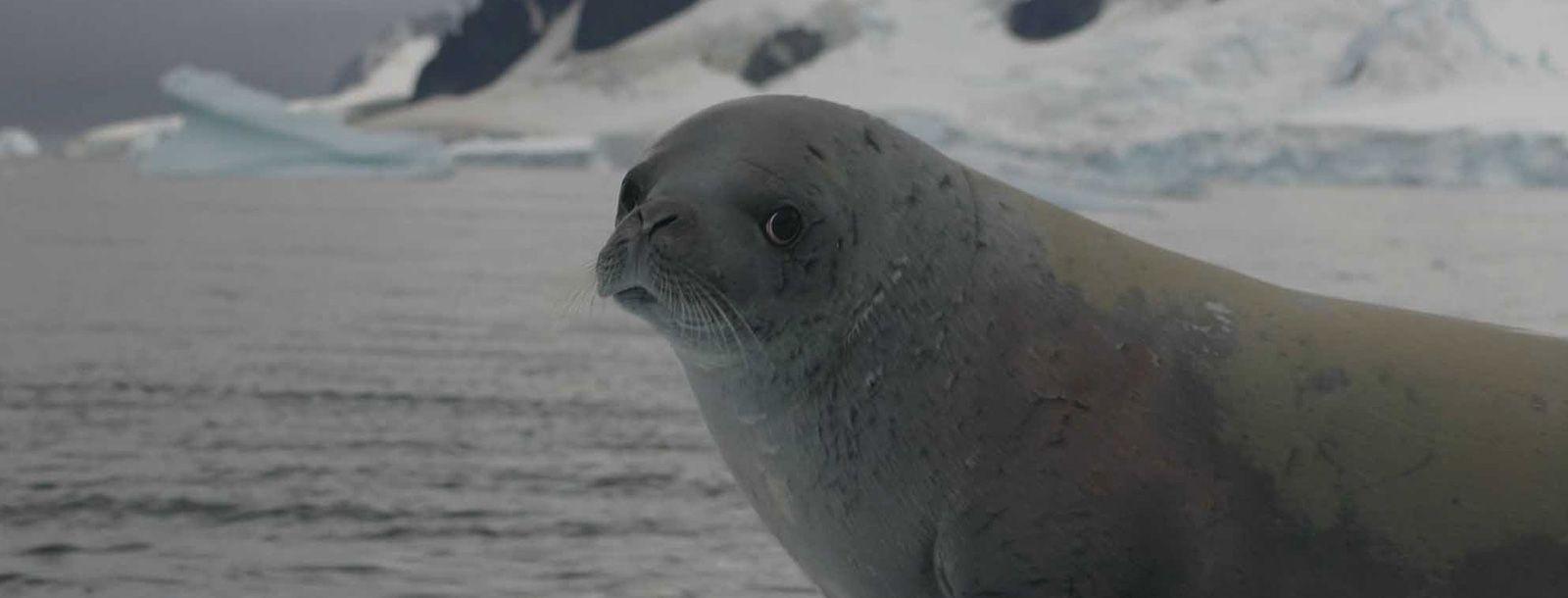 南極クルーズ 14泊15日